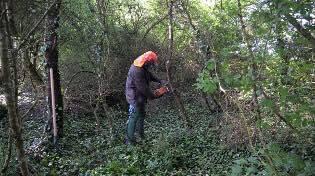 tronçonnage des arbustes envahissants