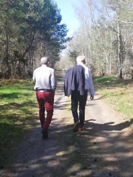 Promenade dans un chemin rural traversant une forêt ouverte